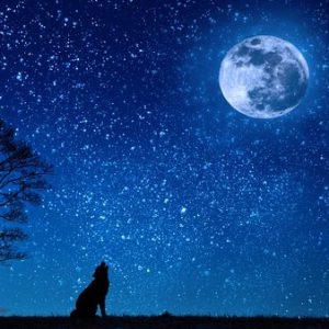 wolf maan