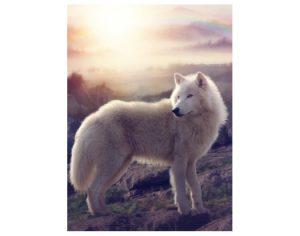 wolf kaartje